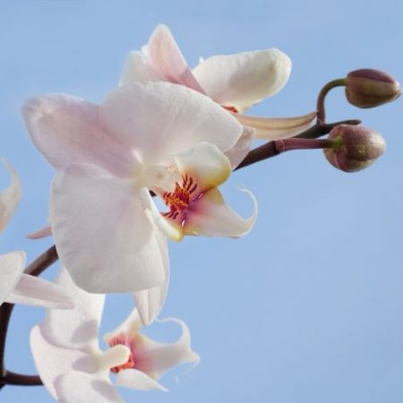 Orchids - Romantic Flower